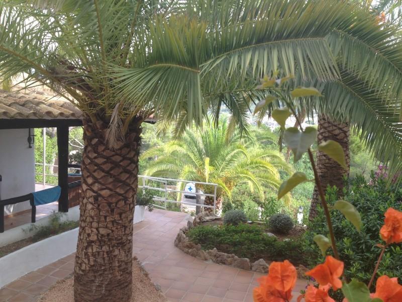 Mallorca Wohnung Mieten Privat